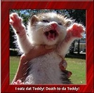 Free ANIMATED LOLCATZ Cards