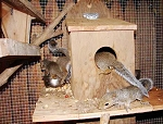 Hurricane Ike's orphaned infant squirrels